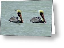 Twins Brown Pelican In Gulf Of Mexico Greeting Card