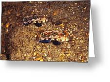 Twinspot Goby Pair , Signigobius Greeting Card