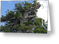 Twisted And Gnarled Bristlecone Pine Tree Trunk Above Crater Lake - Oregon Greeting Card by Christine Till