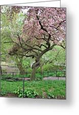 Twisted Cherry Tree In Central Park Greeting Card