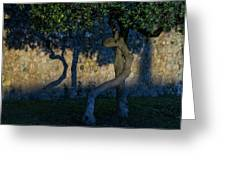 Twisted Early Morning Shadows Greeting Card