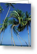 Twisted Palms On The Island Of Trinidad Greeting Card