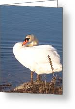 Twisted  White Swan Greeting Card