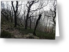 Twisted Woods Greeting Card