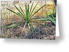 Twisted Yucca Greeting Card
