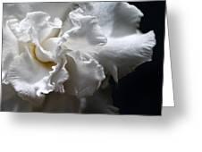 Twisting Folds Greeting Card