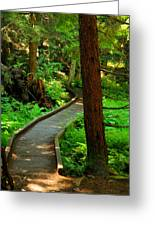 Twisting Path Through The Woods Greeting Card