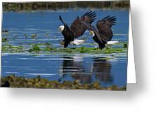 Two American Bald Eagle Touching Down At Low Tide Greeting Card