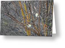 Two American Goldfinch Greeting Card