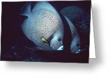 Two Angelfish Greeting Card