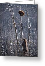 Two Bears Up A Tree Greeting Card