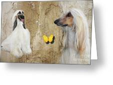 Two Beautiful Afghans Greeting Card