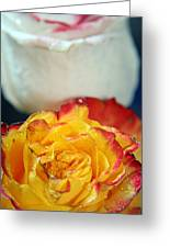 Two Beautiful Roses Greeting Card