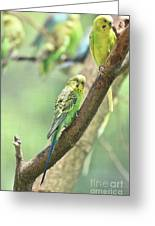 Two Beautiful Yellow Parakeets In A Tree Greeting Card
