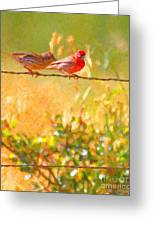 Two Birds On A Wire Greeting Card by Wingsdomain Art and Photography