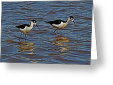 Two Black Neck Stilts  Greeting Card