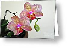 Two Blooms For You Greeting Card