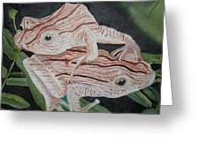 Two Brown Striped Frogs Greeting Card