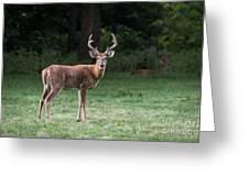 Two Bucks Greeting Card