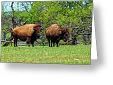 Two Buffalo Standing Greeting Card