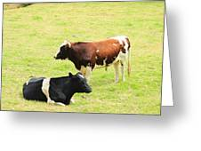 Two Bulls In A Pasture Greeting Card