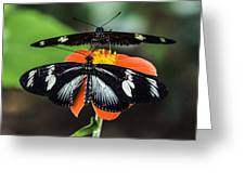Two Butterflies-one Flower Greeting Card