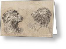 Two Camel Heads [recto] Greeting Card