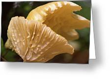Two Cantharellus Greeting Card