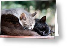 Two Cats  Sleeping  Greeting Card