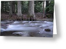 Two Ceders Next To A Mountain Stream Greeting Card
