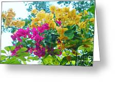 Two Color Flowers Greeting Card