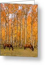 Two Colorado High Country Autumn Horses Greeting Card
