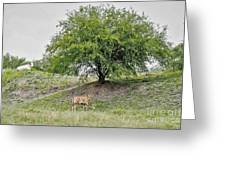 Two Cows And A Tree Greeting Card
