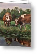 Two Cows By A Pond Greeting Card
