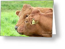 Two Cows Greeting Card
