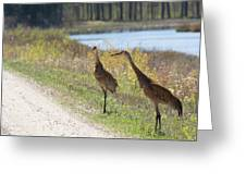 Two Cranes Greeting Card