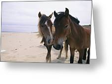 Two Curious Wild Horses On The Beach Greeting Card by Nick Caloyianis