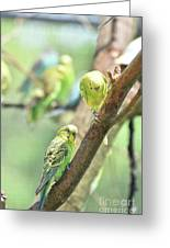 Two Cute Little Parakeets In A Tree Greeting Card