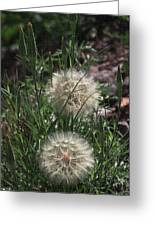 Two Dandelions, Greeting Card