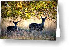 Two Deer In Autumn Meadow Greeting Card