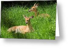 Two Deer In Tall Grass Greeting Card