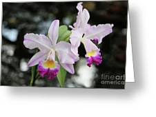Two Delicate Orchids Greeting Card