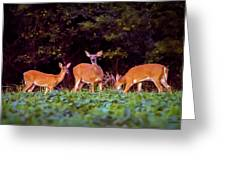 Two Doe And One Buck Greeting Card
