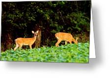 Two Doe Greeting Card