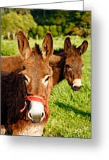Two Donkeys Greeting Card