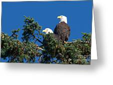 Two Eagles Greeting Card