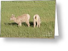 Two Ewes In The Badlands Greeting Card