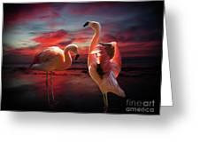 Two Flamingos Greeting Card