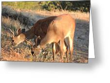 Two Forked Horns Greeting Card
