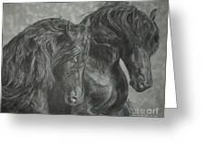 Two Friesian Stallions Greeting Card